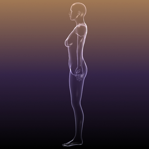 female body anatomy 3d model 3ds max dxf dwg fbx cob c4d dae x lwo hrc xsi  obj 116165