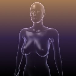 Female Body Anatomy ( 121.38KB jpg by 5starsModels )