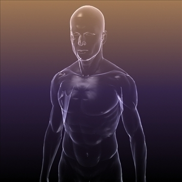 human body silhouette of a male 3d model 3ds max dxf dwg fbx c4d lwo hrc xsi wrl wrz obj 112047
