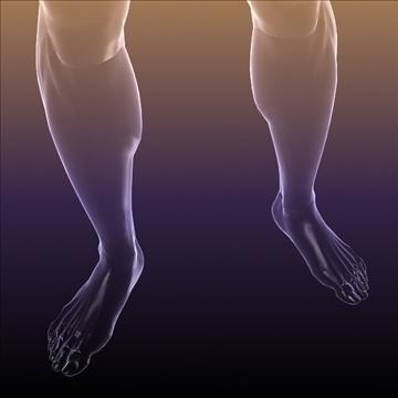 ljudsko tijelo silueta muškog 3d modela 3ds max dxf dwg fbx c4d lwo hrc xsi wrl wrz obj 112051