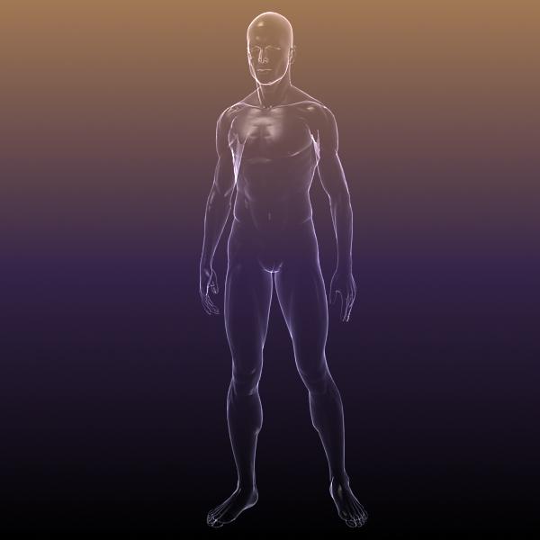 Male And Female Anatomy Transparent Bodies 3d Model Flatpyramid