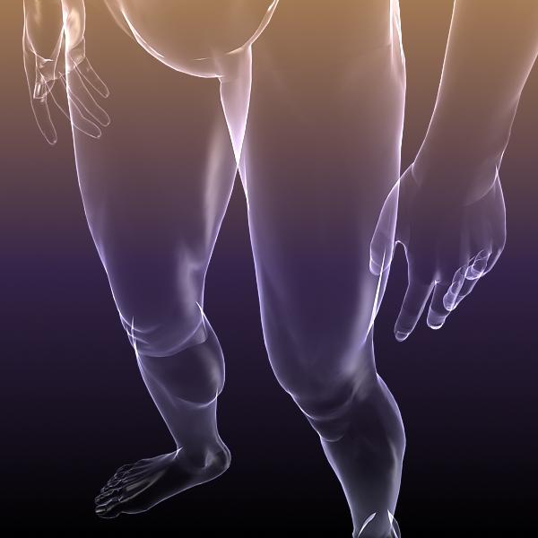 muška i ženska anatomija - transparentna tijela 3d model 3ds max dxf dwg fbx cob c4d dae x lwo hrc xsi wrl wrz obj 117706