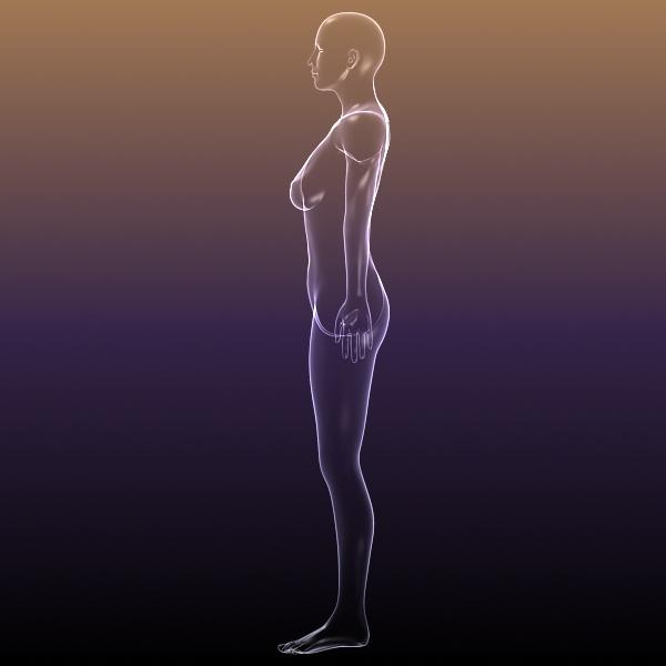 muška i ženska anatomija - transparentna tijela 3d model 3ds max dxf dwg fbx cob c4d dae x lwo hrc xsi wrl wrz obj 117717