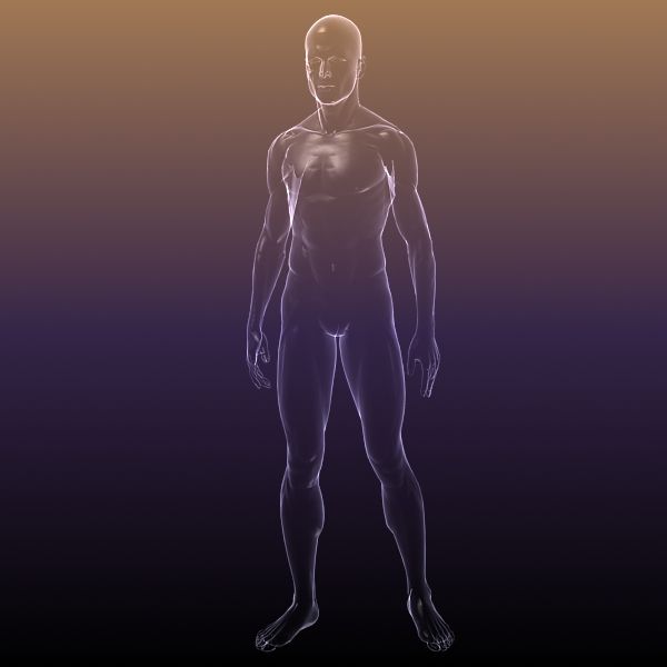 Male And Female Anatomy Transparent Bodies 3d Model Buy Male And