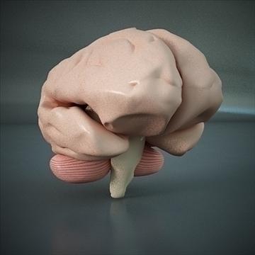 εγκεφάλου ενός ανθρώπου ρεαλιστική υψηλή ανάλυση 3d μοντέλο 3ds max dxf dwg fbx c4d ναι x lwo ma mb 3dm hrc xsi κωδικός scn wrl wrz obj άλλο 112021
