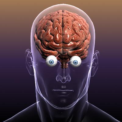мозак са очима у људском телу КСНУМКСд модел КСНУМКСдс мак фбк цКСНУМКСд лво хрц кси текстура обј КСНУМКС