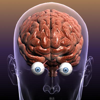 хүний биед нүдтэй тархи 3d загвар 3ds max fbx c4d lwo hrc xsi texture obj 117684
