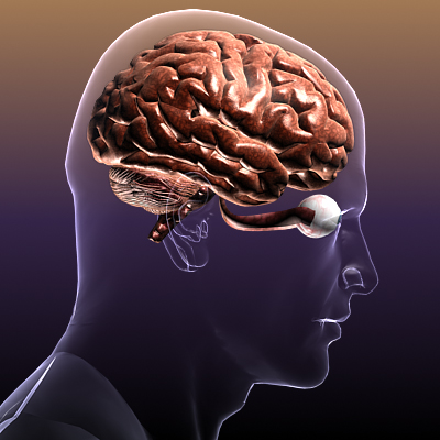 хүний биед нүдтэй тархи 3d загвар 3ds max fbx c4d lwo hrc xsi texture obj 117685