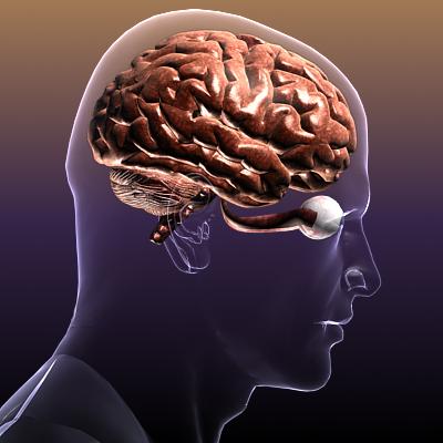 smadzenes ar acīm cilvēka ķermenī 3d modelis 3ds max fbx c4d lwo hrc xsi faktūra obj 117685