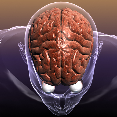 brain with eyes in a human body 3d model 3ds max fbx c4d lwo hrc xsi texture obj 117686
