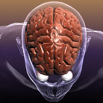 smadzenes ar acīm cilvēka ķermenī 3d modelis 3ds max fbx c4d lwo hrc xsi faktūra obj 117686