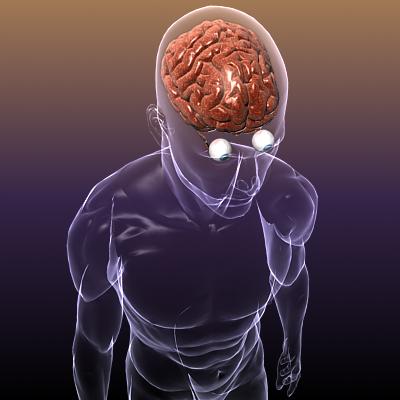 хүний биед нүдтэй тархи 3d загвар 3ds max fbx c4d lwo hrc xsi texture obj 117687