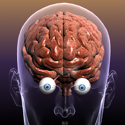 Brain with Eyes in a Human Body ( 158.18KB jpg by 5starsModels )