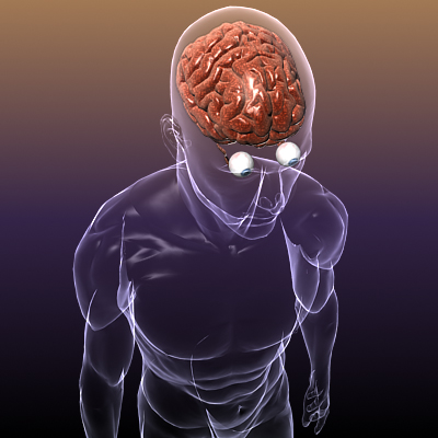 Brain with Eyes in a Human Body ( 109.55KB jpg by 5starsModels )