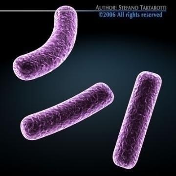 bacillus bakteriyası 3d model 3ds c4d obj 78062
