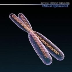 Chromosome with DNA ( 38.45KB jpg by tartino )