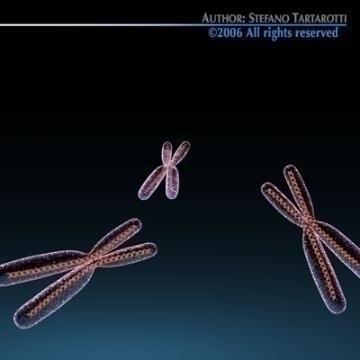 Chromosome with DNA 3d model c4d 3ds obj 78070
