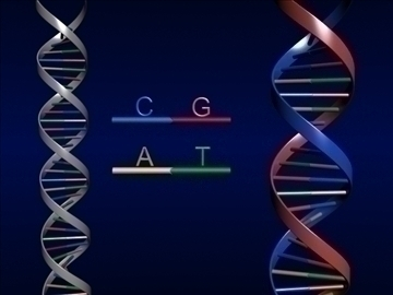 DNA ( 52.51KB jpg by S.E )