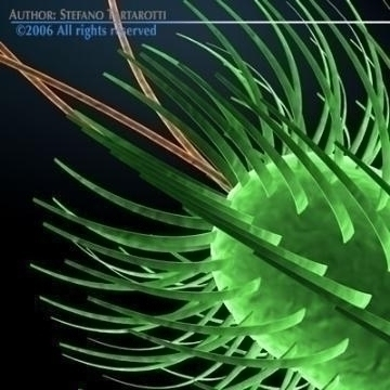 bakterija escherichia coli 3d model 3ds c4d obj 78073