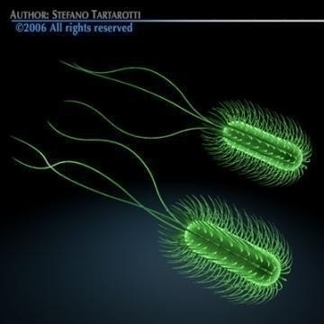escherichia coli bacteria 3d model 3ds c4d obj 78074