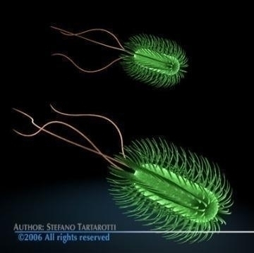 escherichia coli bacteria 3d model 3ds c4d obj 78077