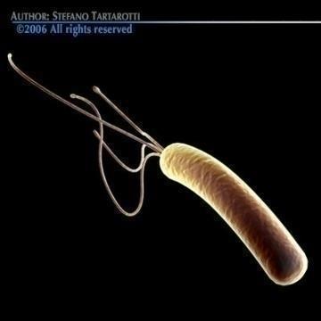 bakterie Helicobacter pylori 3d model 3ds c4d obj 78080