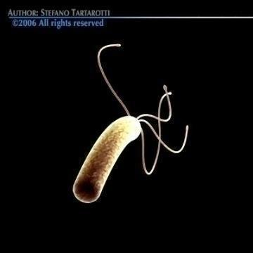 helicobacter pylori bacteria 3d model 3ds c4d obj 78081