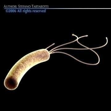helicobacter pylori bacteria 3d model 3ds c4d obj 78084
