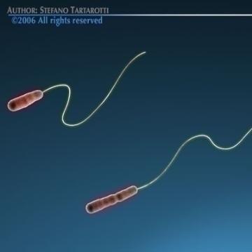 legionella bacteria 3d model 3ds c4d obj 78090