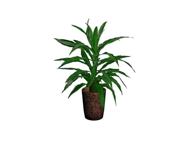 dracaena plant 3d model max 113884