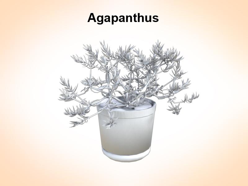 samhail agapanthus 3d 3ds fbx c4d le hrc xsi obj 123659