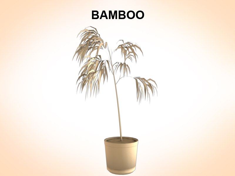 bambus 3d model 3ds fbx c4d lwo ma mb hrc xsi obj 123353