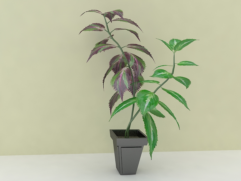 houseplante 3d model max 157293