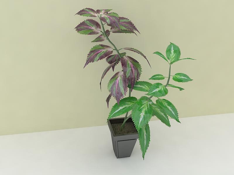 houseplante 3d model max 157294