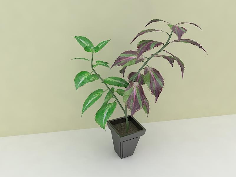 houseplante 3d model max 157295