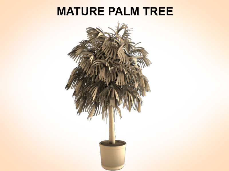 mature palm 3d model 3ds fbx c4d lwo ma mb hrc xsi obj 123517