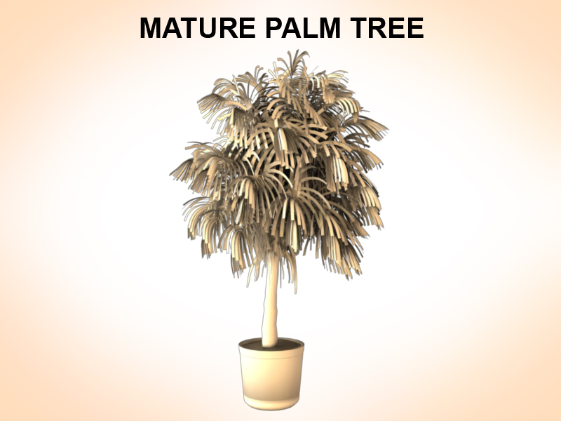 mature palm 3d model 3ds fbx c4d lwo ma mb hrc xsi obj 123519
