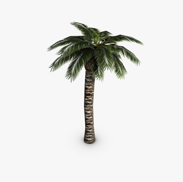 palm tree 3d model 3ds max fbx c4d obj 139422