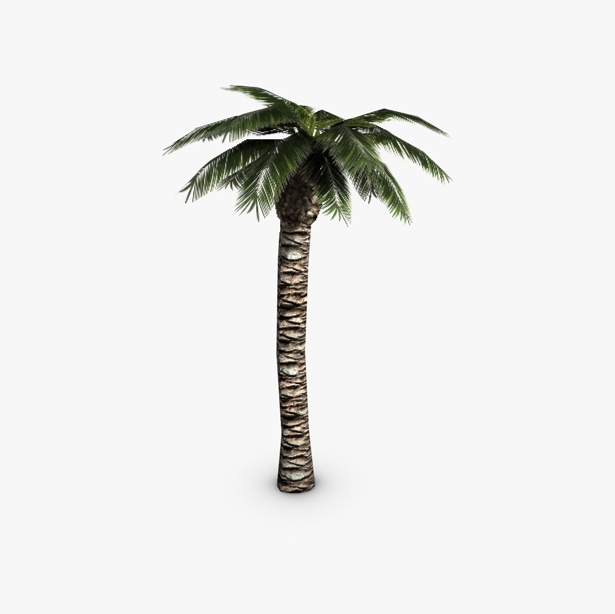 palm tree 3d model 3ds max fbx c4d obj 139423