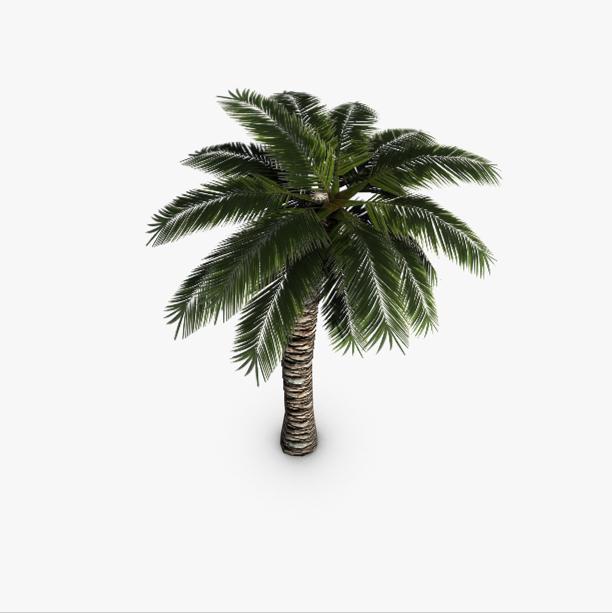 palm tree 3d model 3ds max fbx c4d obj 139424