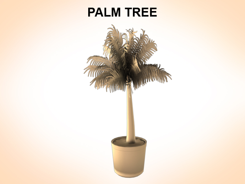 palm tree young 3d model 3ds fbx c4d lwo ma mb hrc xsi obj 123587