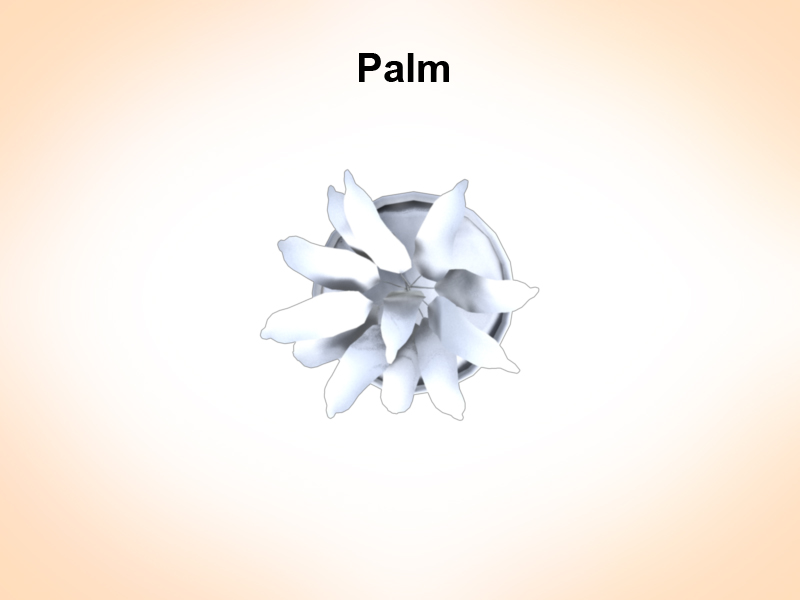 palm vase 3d model 3ds fbx c4d lwo ma mb hrc xsi obj 123966