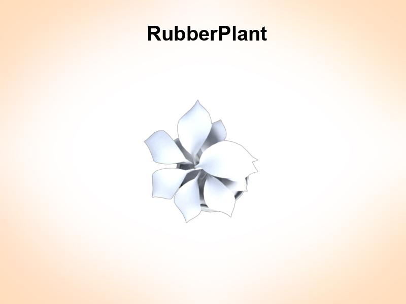 rubber plant 3d model 3ds fbx c4d lwo ma mb hrc xsi obj 123971