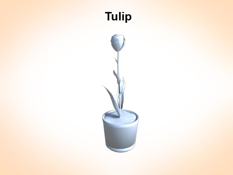 tulip 3d model 3ds fbx c4d lwo ma mb hrc xsi obj 123254