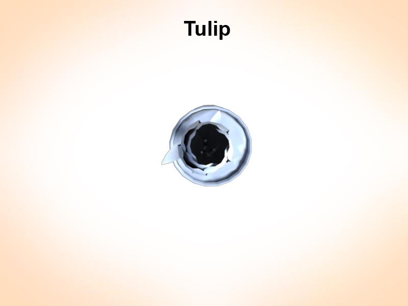 tulip 3d model 3ds fbx c4d lwo ma mb hrc xsi obj 123255