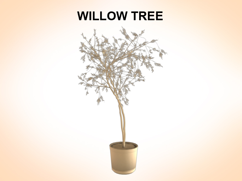 willow tree 3d model 3ds fbx c4d lwo ma mb hrc xsi obj 123677