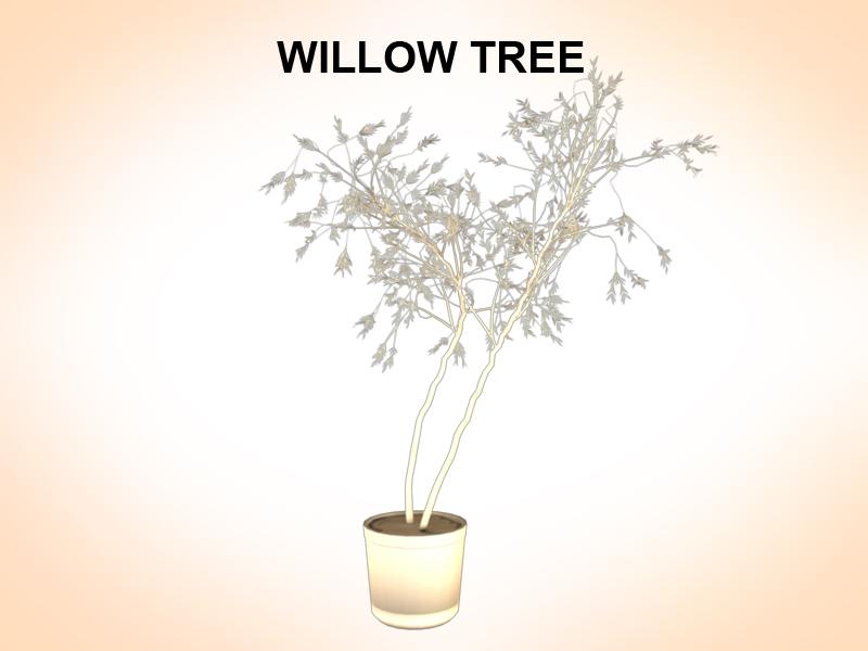 willow tree 3d model 3ds fbx c4d lwo ma mb hrc xsi obj 123678