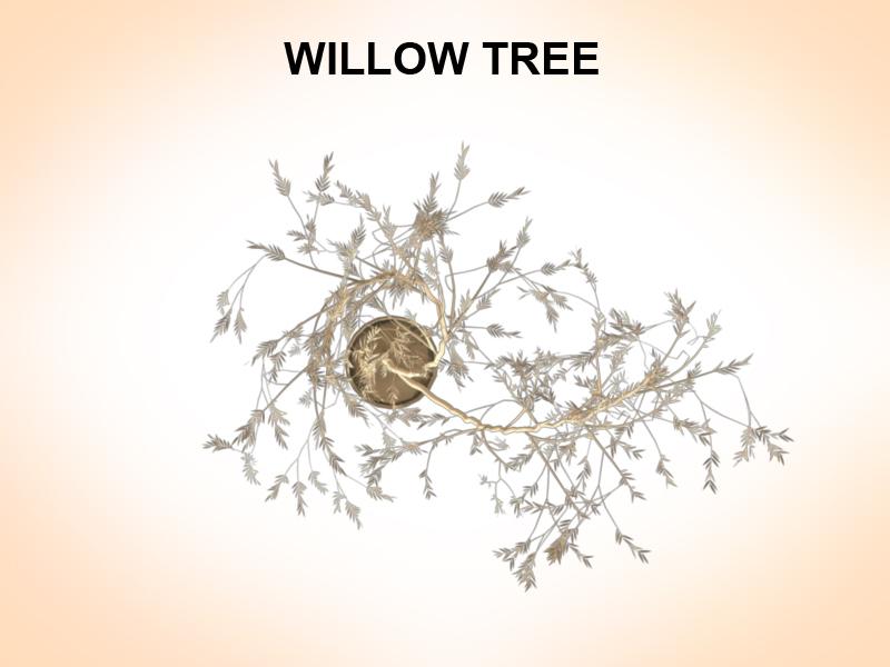 willow tree 3d model 3ds fbx c4d lwo ma mb hrc xsi obj 123679