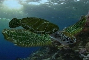 sea turtle 3d model ma mb 85528