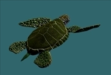 sea turtle 3d model ma mb 85531
